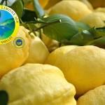 4_Limone di Amalfi IGP