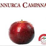 7_Melannurca Campana IGP